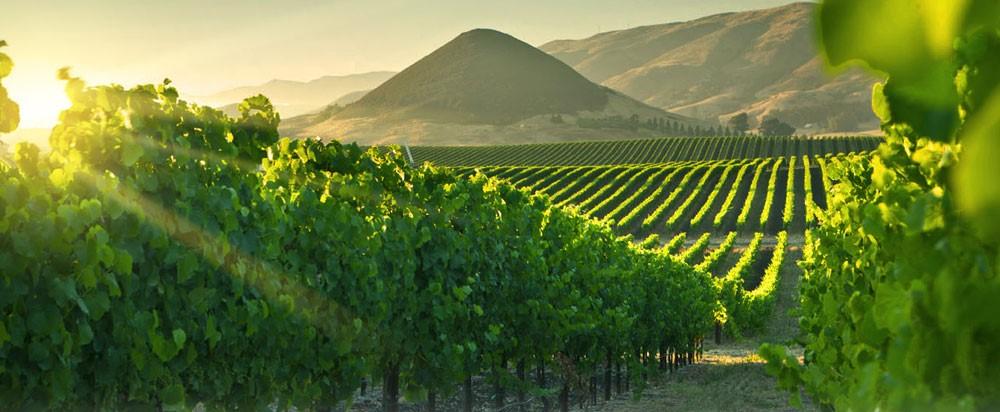 Pacific Vineyard